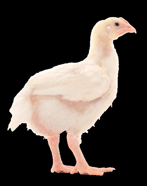 flocks-slider-img